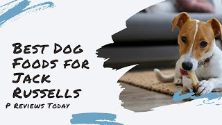 5 Best Dog Foods For Jack Russell Terriers | P Reviews Today