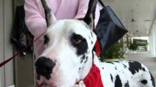 911 calls from Silver Springs Florida man who shot and killed 2 Great Danes on 8/12/10