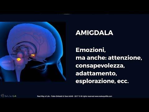 Mente & Cervello #1 - amigdala: Emozioni, ma anche consapevolezza, attenzione, adattamento, ecc.