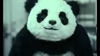 Смешное видео панда.
