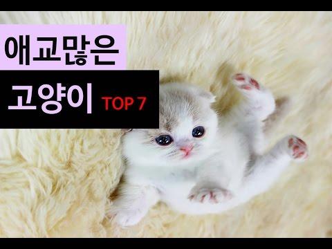 (랭킹박스) 애교 많은 고양이 TOP 7