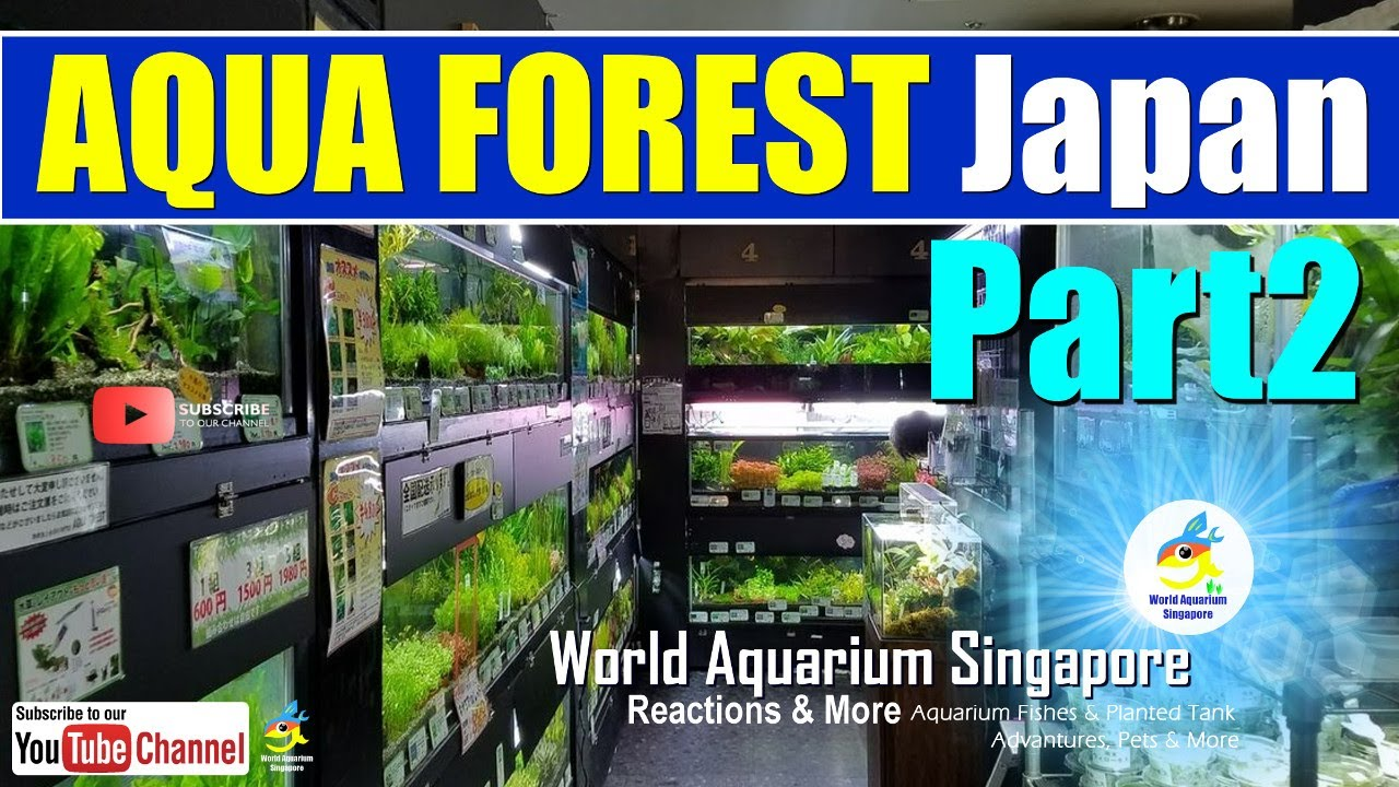 Best Aquascape Tanks Aqua Forest Japan Aquarium Shop Tour ...