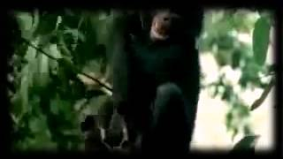 Животные трахаются  Очень смешное видео