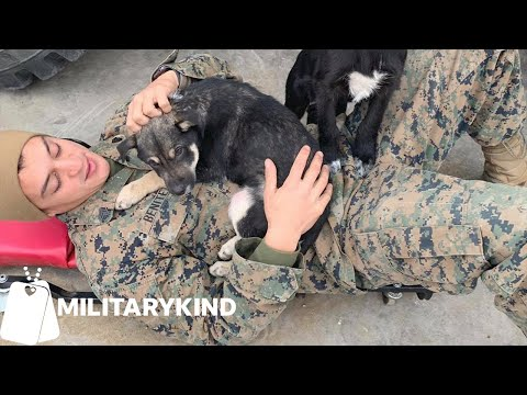 Marines work together to save two puppies   Militarykind
