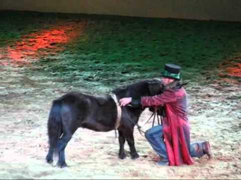 Pony Apassionata Ganz Ein Groß Kleines Im Sterne Licht Der 35ARqjL4