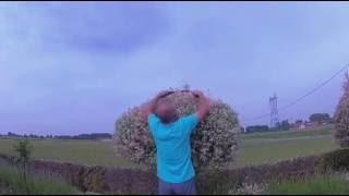 Taille Des Salix Par F1rcx 020