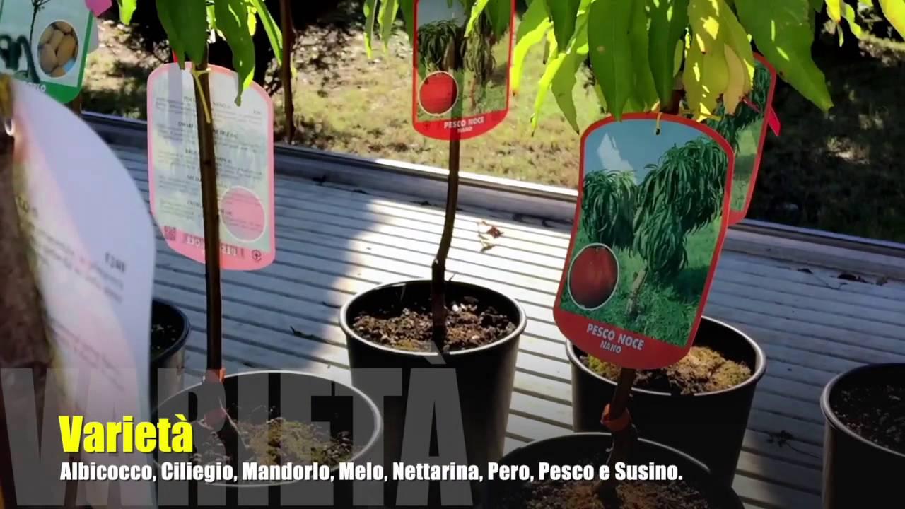 Piante Da Frutto Nane video piante #23 nane - youtube