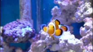 30 Gal Reef Build Month 2