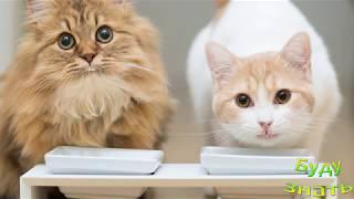 А Ваша Кошка вытаскивает  еду из миски?