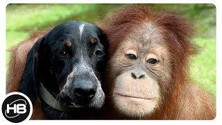 Это Самые Умные Животные в Мире