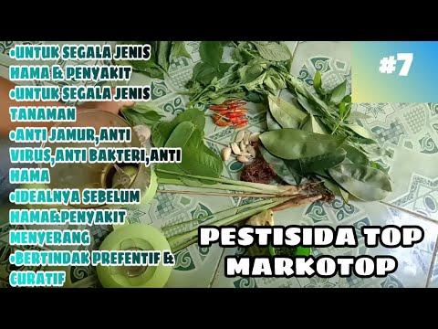 cara-pembuatan-pestisida-nabati-organik-alami-i-membuat-obat-racun-hama-dan-penyakit-secara-umum