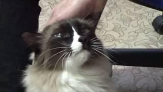 Кот заболел.