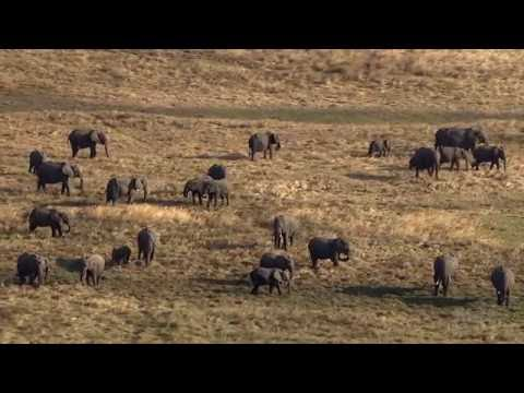 The Great Elephant Census     HHMI BioInteractive Video