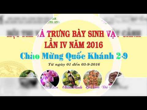 VIDEO SVC KrongAna  2016