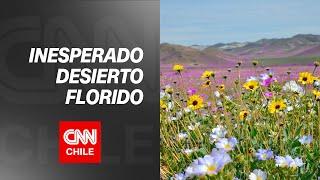 Desafío Tierra: El sorpresivo desierto florido