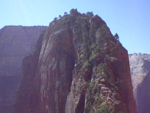 California Condor over Angel's Landing