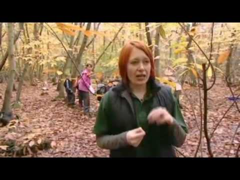 The work of the Wildwood Trust part 3