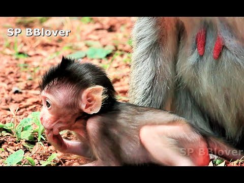 Cute baby monkey girl