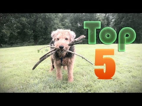 Top5 The Most Destructive Dog Breeds With A Genetic Link