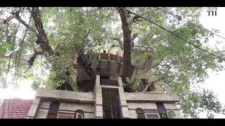 Family builds their house around a 150-year-old tree