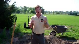 Planting Asparagus Crowns