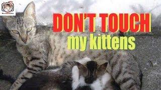 CAT DIARY #04: FEEDING MY CATS - I CAN'T GET NEAR THE KITTENS