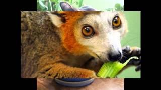 Видео про животных как они едят растения.