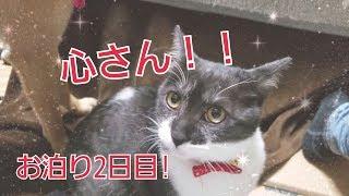 心さんお泊り2日目 thumbnail