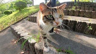 顔を見たら喜んで駆け寄ってくる野良猫が可愛過ぎる