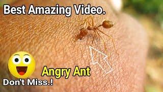 Best Amazing Video ||  Amazing Experiment On Anger Ants || Amazing Video 2019