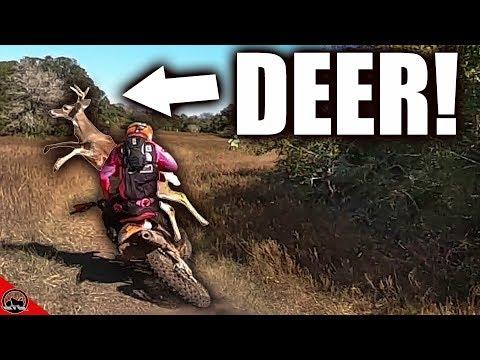 deer-hits-dirt-bike!
