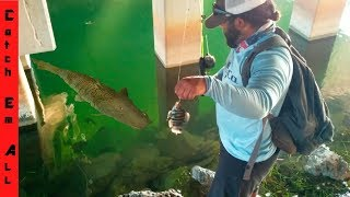 GIANT STRIPED FISH Takes FISH on the FISHING LINE in CRYSTAL CLEAR WATER! thumbnail