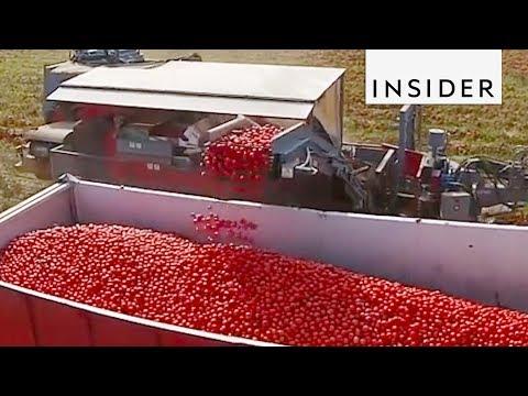 Tomato Color Sorting Machine