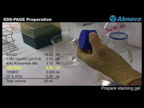 SDS-PAGE Preparation