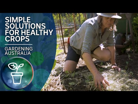 Grow Healthy Winter Vegies With These Simple Solutions | Quick Crops | Gardening Australia