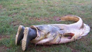 Рыбалка! Самые смешные моменты!!! 2016