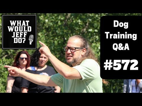 dog-training---leash-reactive-dog---training-mal-dogs---what-would-jeff-do?-q&a-ep.572-(2019)