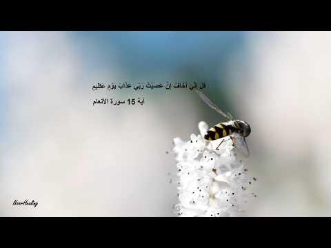 Красивое чтение Корана💚 Quran Recitation of Surah Al an`am