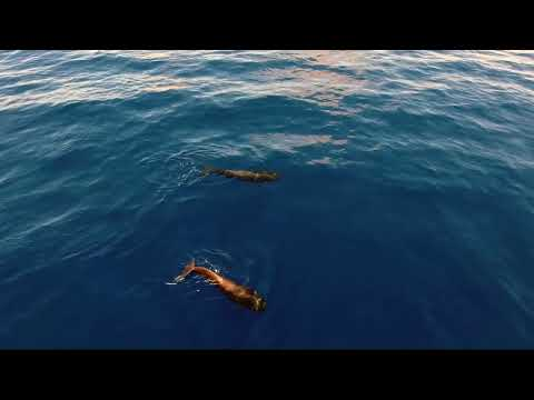 Beyond the Sea Smoke -  OFFICIAL MUSIC VIDEO