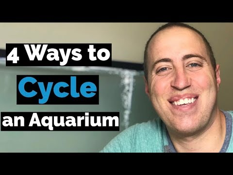 How To Cycle a Freshwater Tank?