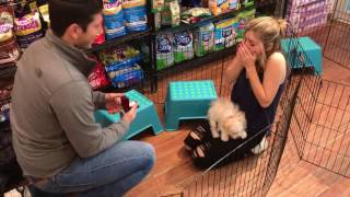 Guy proposes with puppy, girl nearly has heart attack thumbnail