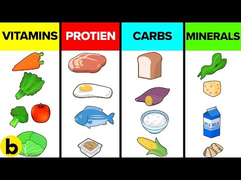 How The Six Basic Nutrients Affect Your Body