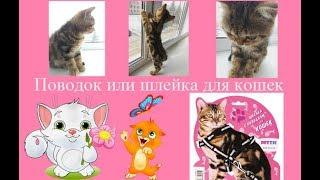 Поводок или шлейка для кошек