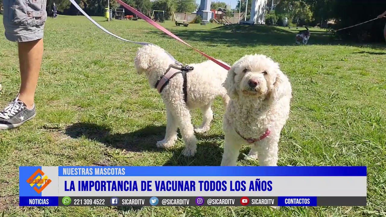 Más de 200 mascotas vacunadas en Sicardi