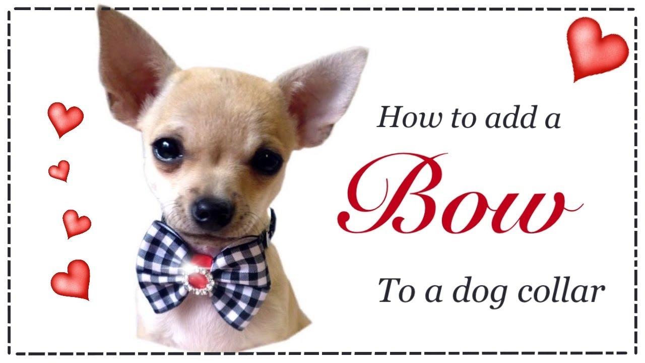 Diy Dog Bow Collar