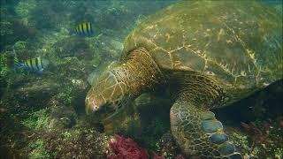 Cap Volon'Terre - 10mn aux îles Galapagos
