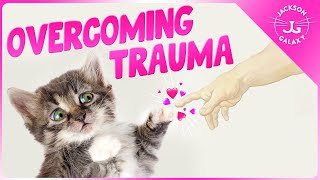 From Trauma to Trust: Helping a Cat Recover from a Troubled Past.