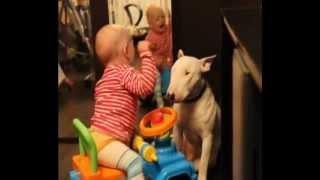 жесть собака укусила за лицо.wmv(ставтье ваши лайки и дислайки оставьте ваше мнение о видео., 2012-05-12T19:21:20.000Z)