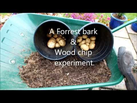 HGV How to grow Organic Potatoes, in buckets, in Forest bark & Wood chips, start to finish