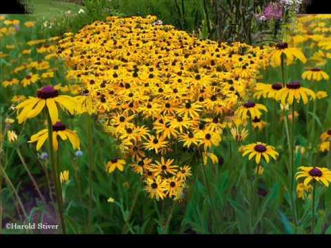 10 อันดับ ดอกไม้ที่สวยที่สุดในโลก